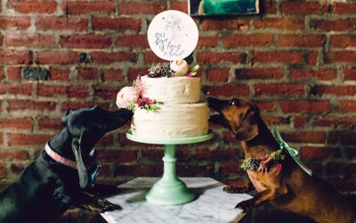 This Wedding That A Philly Photographer Threw For Her Dogs Is The Best Thing You Have Seen All Week Weve Got Photos Video