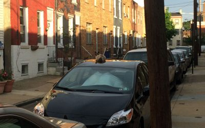 Cat on the roof of a car