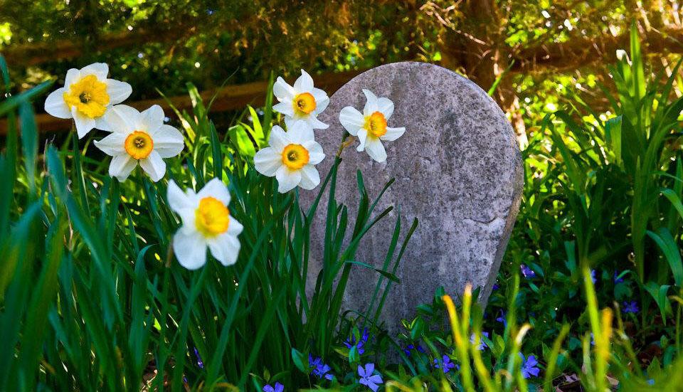 Photo credit: Whipps Garden Cemetery
