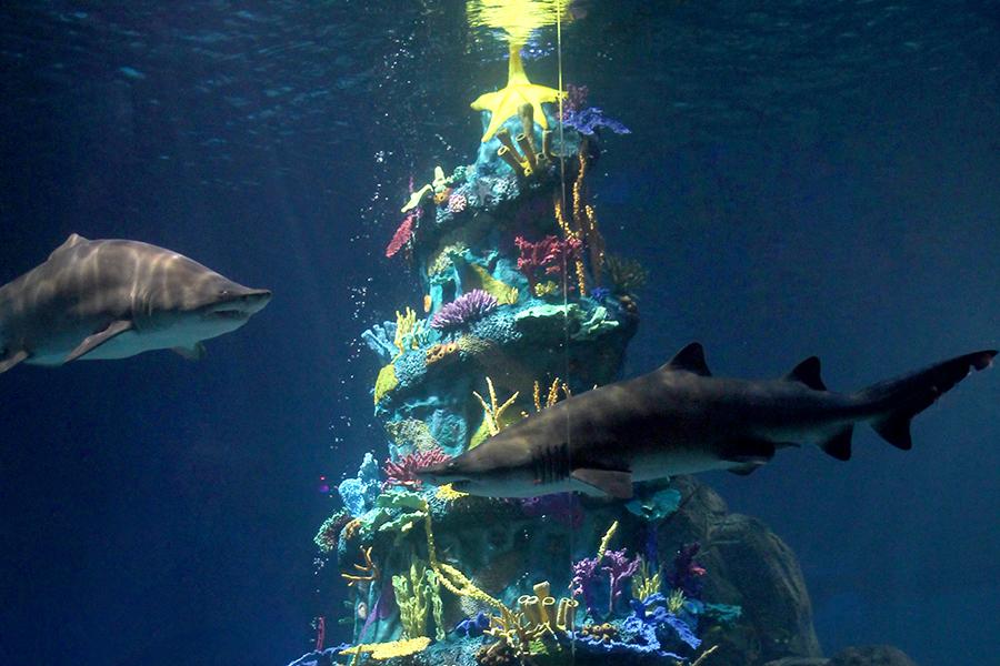 A Parent S Guide To Adventure Aquarium S Christmas