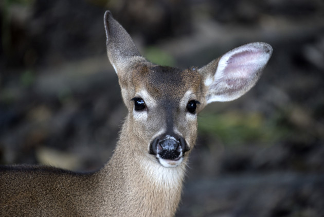 Soon You Can Bow Hunt for Deer in This Philly Park