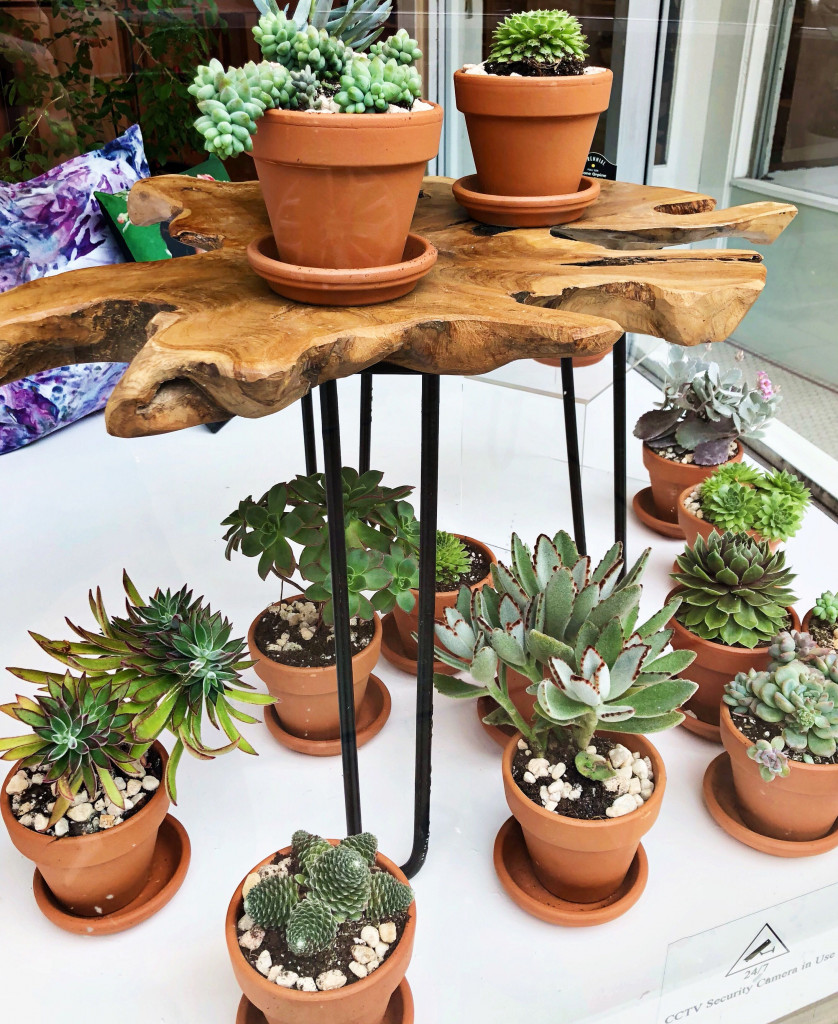 Succulents For At Weekend Photograph By Caroline Cunningham