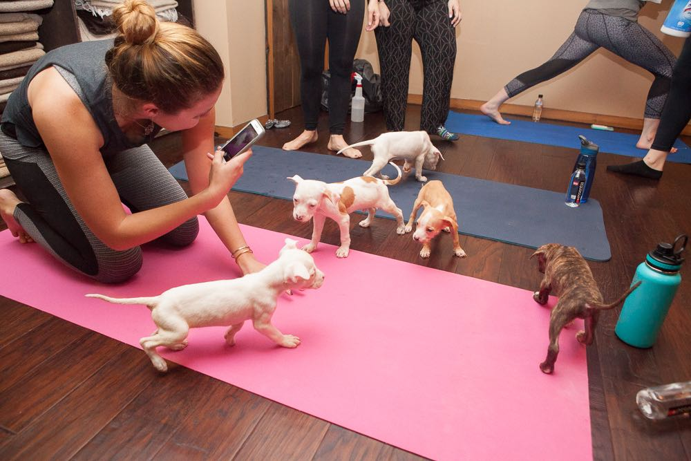 5 Things To Know Before You Try Puppy Yoga