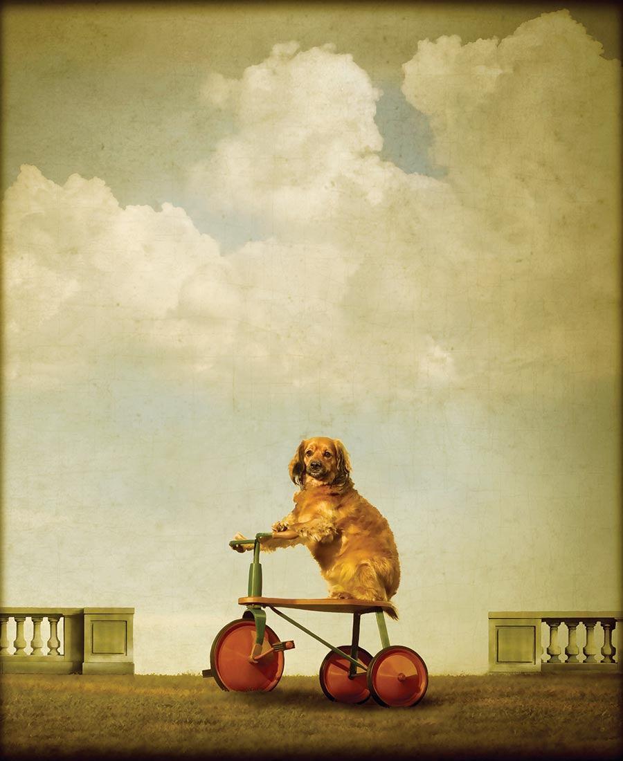 The 8 Best Philadelphia Pet Photographers and Artists