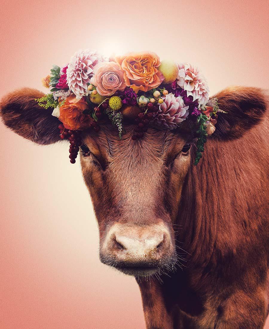 animal ethics vegetarianism eating meat