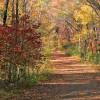 fall foliage hikes