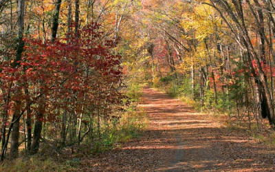 fall foliage hikes