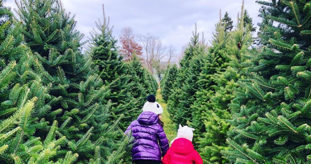 - 20 Christmas Tree Farms Near Philadelphia Where You Can Buy A Tree