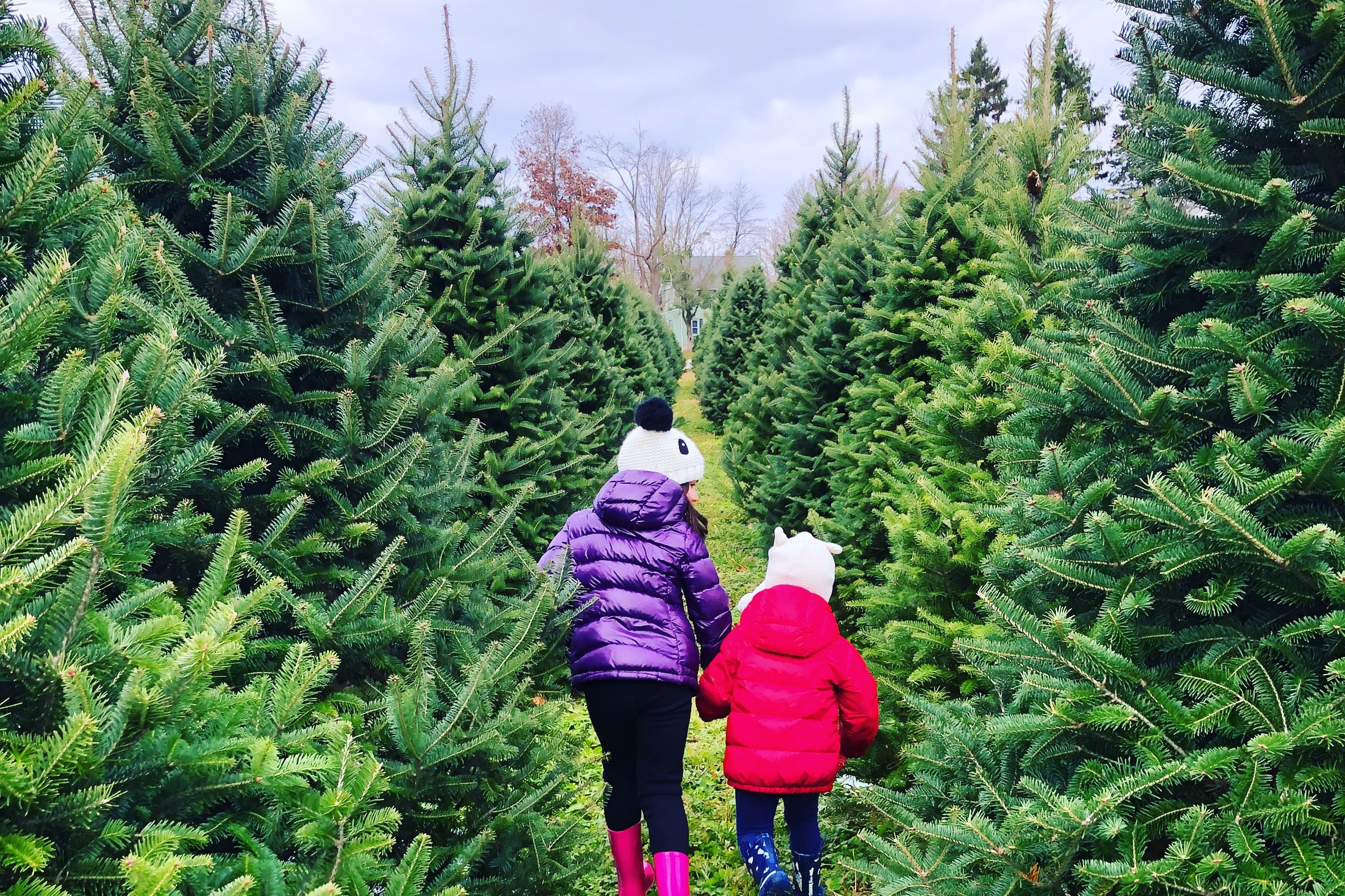20 Christmas Tree Farms Near Philadelphia Where You Can