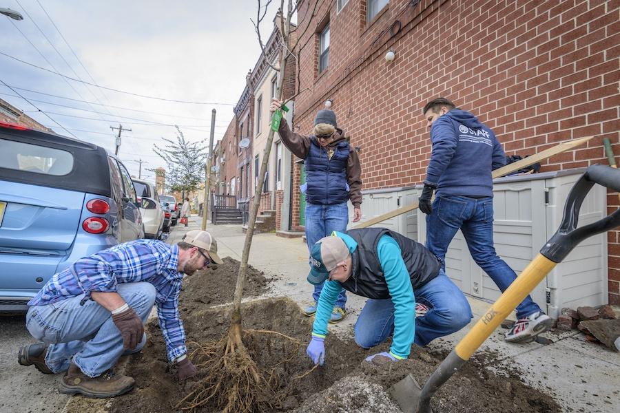 phs tree tenders street tree planting