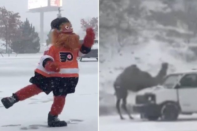snowstorm gritty camel philly