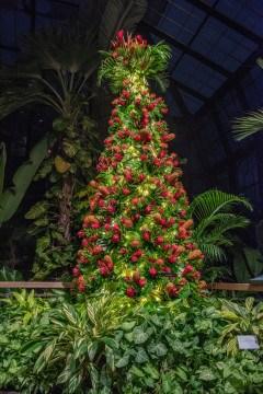 longwood-christmas-flowers