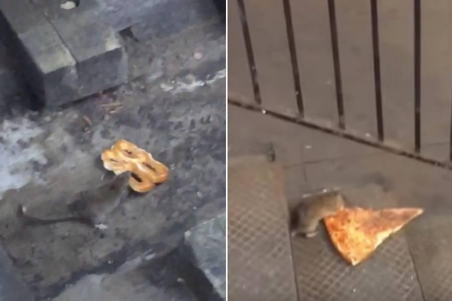 pretzel rat