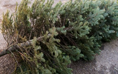 christmas tree trees recycle