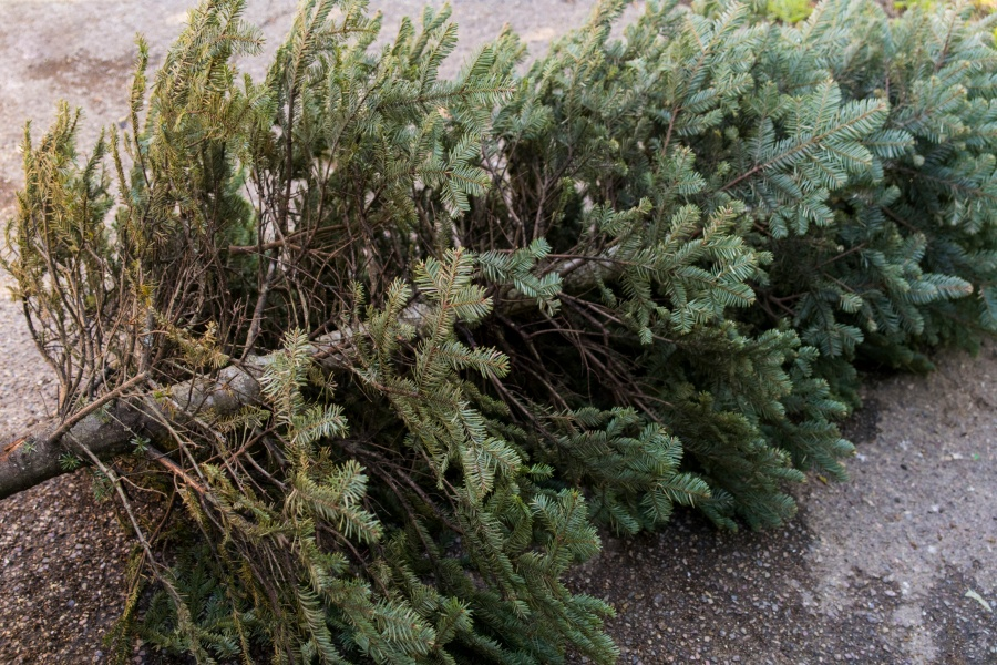 christmas tree trees recycle - How To Recycle Your Christmas Tree In Philadelphia