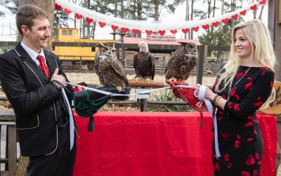 temple university owl mascot wedding