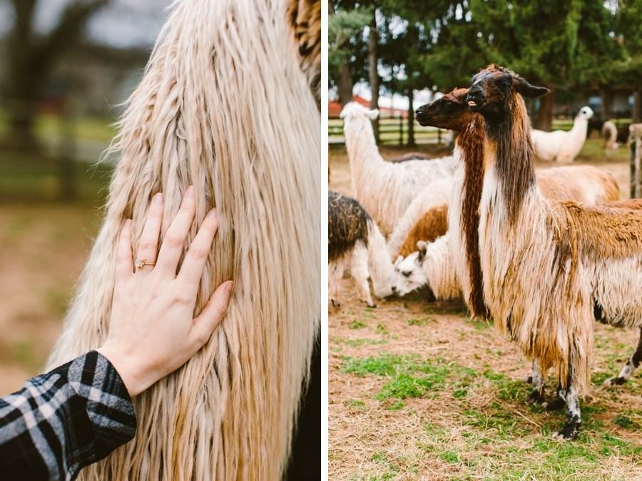 llama farm proposal