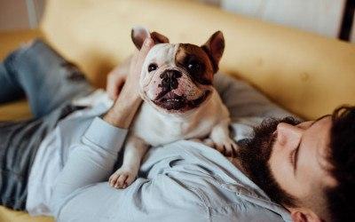 dog-health-benefits