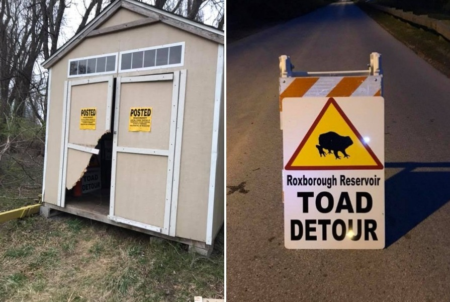 toad detour schuylkill center