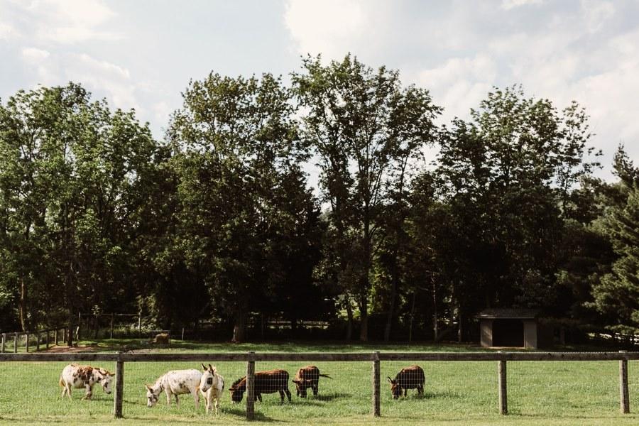 donkeys on a farm