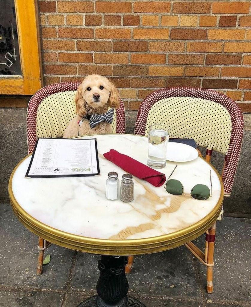 Dog Friendly Restaurants And Bars In Philadelphia