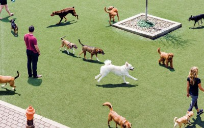 dog parks philadelphia