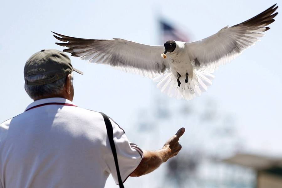 jersey shore seagulls