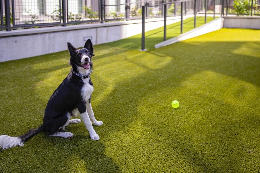the girard apartment profile dog run