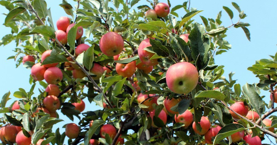 9 Gorgeous Orchards For Apple Picking Near Philadelphia Phillymag Com