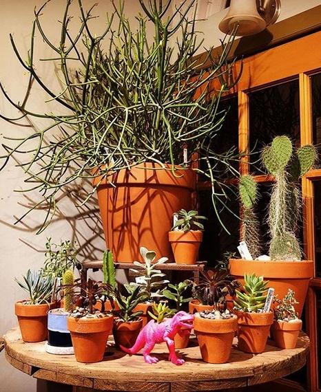 house plants cactus