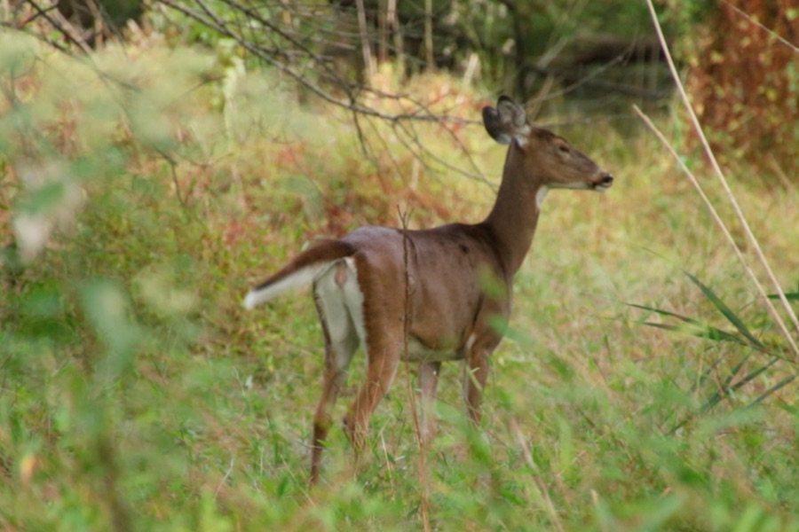deer hunting at heinz wildlife refuge