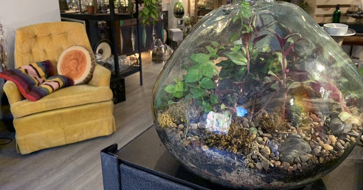 This Local Store S Terrariums Are Great For Forgetful Plant Owners