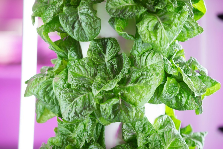 lettuce donated during philly coronavirus crisis
