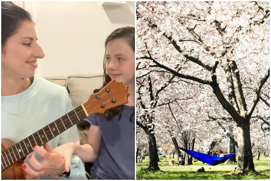coronavirus crisis good news cherry blossoms