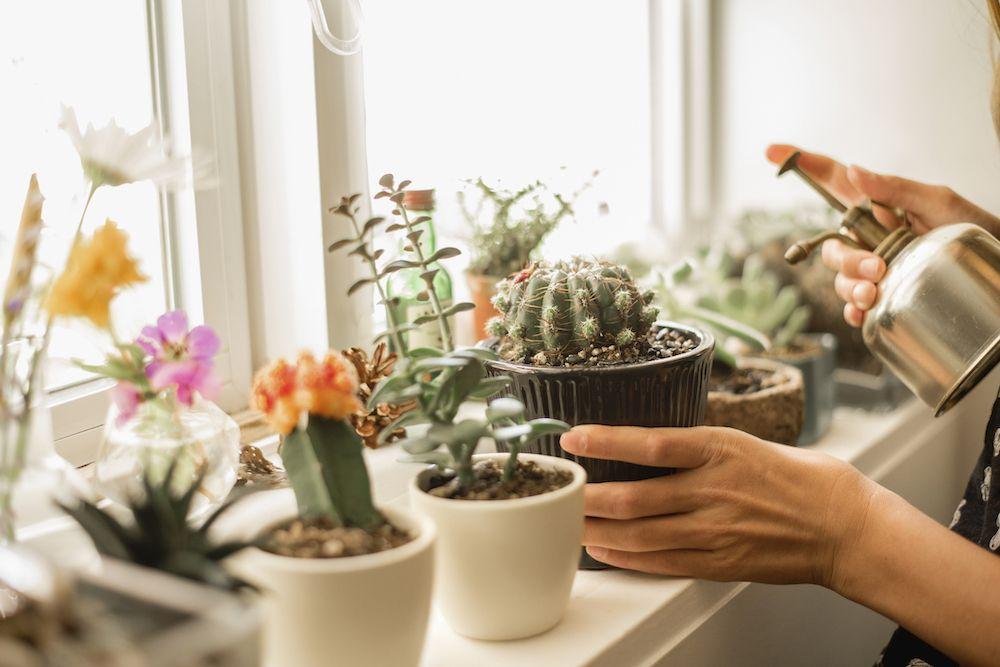 houseplant health benefits