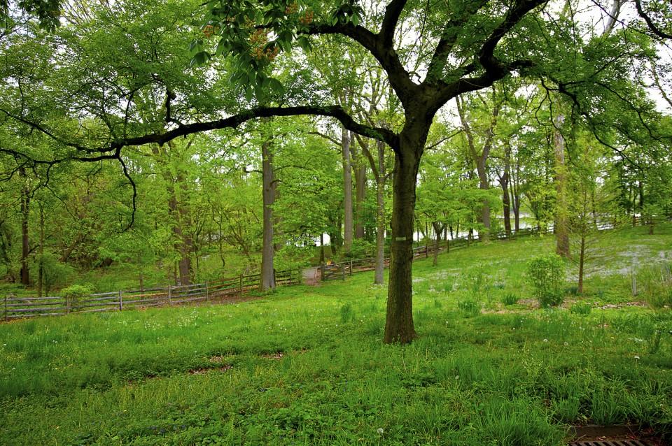 bartram's garden scenic runs philly
