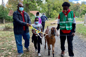 people walking goats as part of the philly goat project, one of the fun things to do in philadelphia this weekend