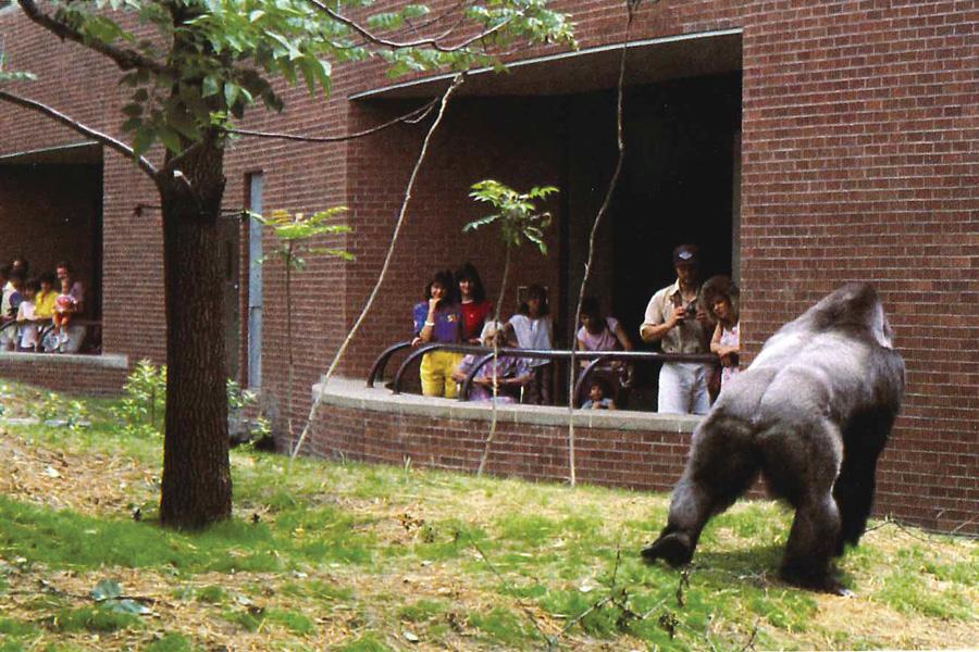 philadelphia zoo fire