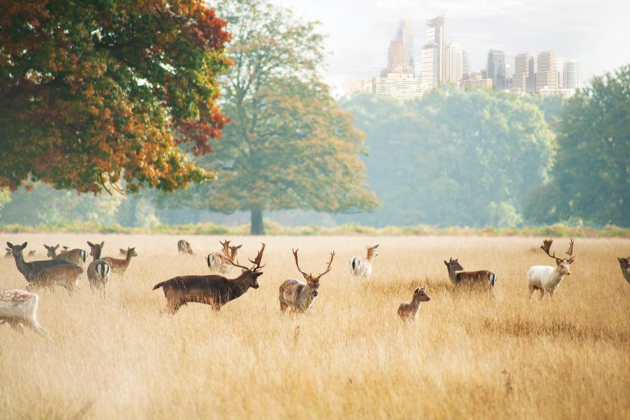 philadelphia deer