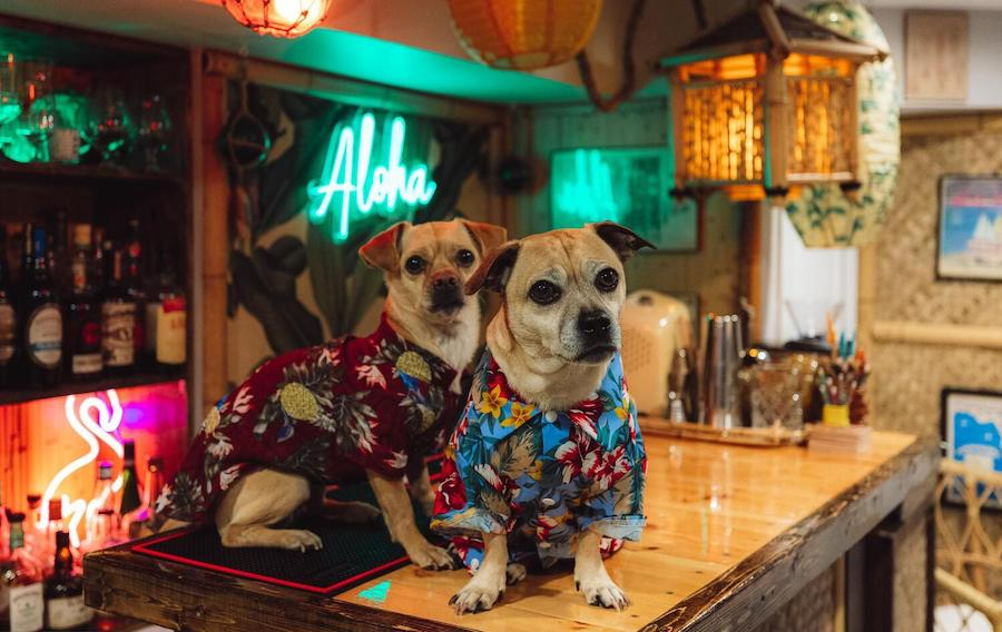 Bruce and Paul at the tiki bar